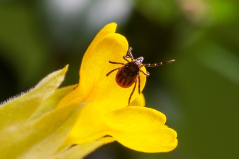 macro-photography-of-insect-in-yellow-flower-3760420.jpg